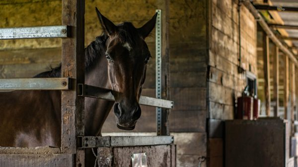 slobber paard